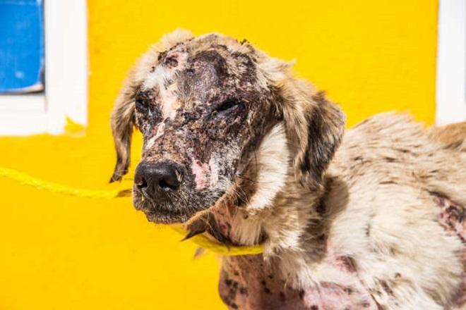 «Жевал сухую корочку хлеба»: голодный пес был болен, но ему смогли помочь