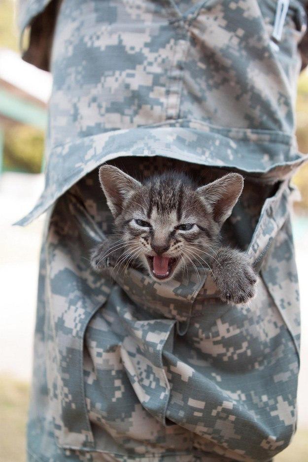 заводского картинки военные животные тонкий, покрыт