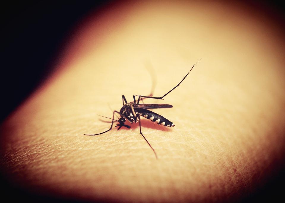 Вор сдался полиции из-за комаров