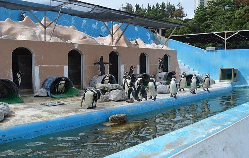 Бывшие сотрудники парка подкармливают животных и вместе с зоозащитниками пытаются найти возможность перевезти дельфина, пингвинов и других животных в новый дом. Однако пока что никаких результатов нет в мире, видео, дельфин, животные, заброшенное, япония