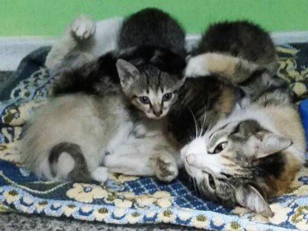 Кошка-мать даже со сломанным позвоночником не бросила котят на морозе