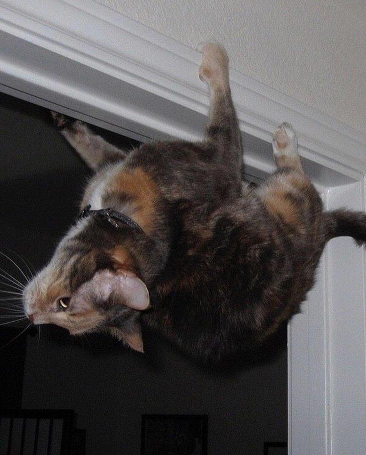 Когда в душе ты летучая мышь животные, коты, настроение