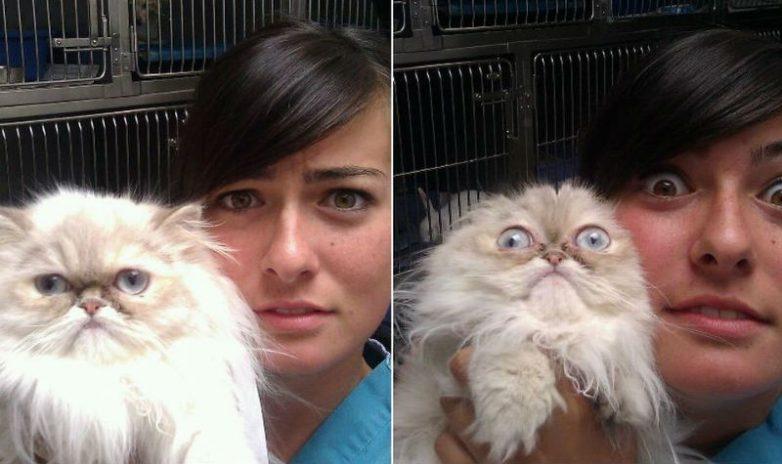 Котики, которые только что осознали, что их привели к ветеринару
