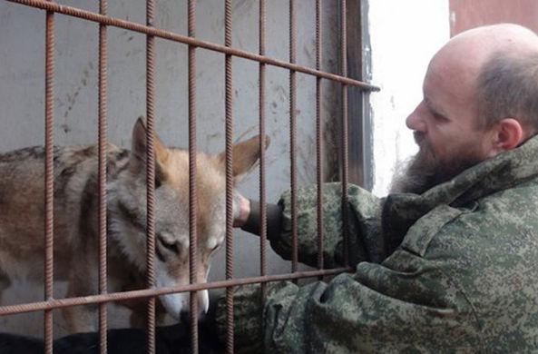 Житель Волгограда приютил в квартире волка