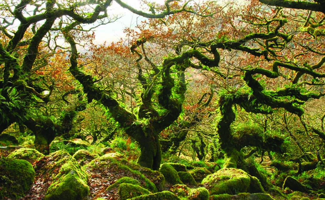 Невероятные леса, буквально …