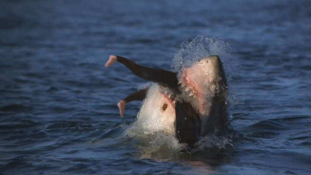 Самые страшные атаки акул, снятые на видео