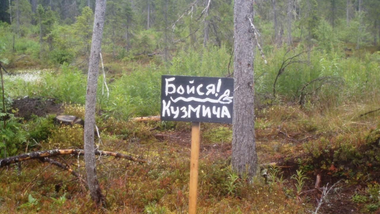 Картинки приколы про лес