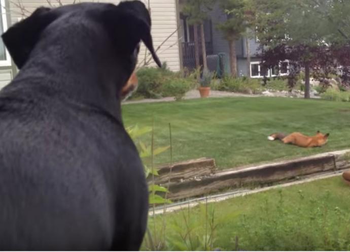 «Эй, рыжий, не наглей!» Пёс-жадина попал в курьёзную ситуацию! Только посмотрите, умора-же