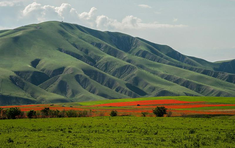 4. Маковое поле может растянуться на несколько километров art, Кыргызстан, пейзаж, ссср, факты