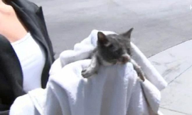 Кот под машиной: истории о том, как мурлыки едва не пострадали от колес авто