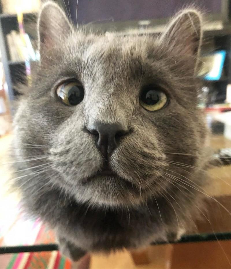 Очаровательный косоглазый кот по кличке Беларус