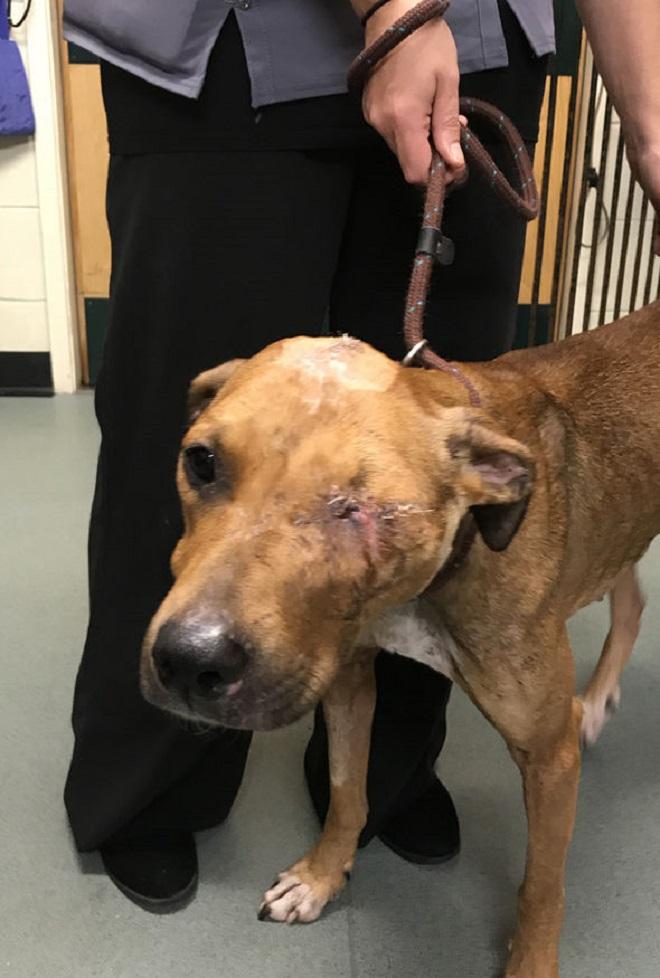 После чудовищных издевательств пес чудом выжил и вновь может вилять обожженным хвостиком в благодарность за спасение