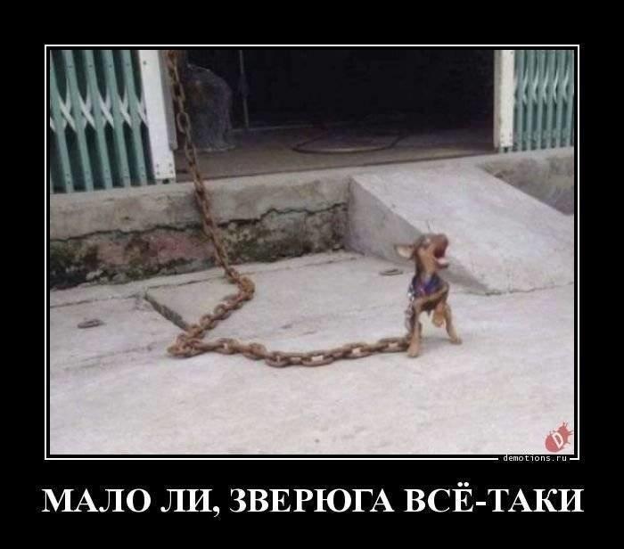 Демотиваторы с собаками