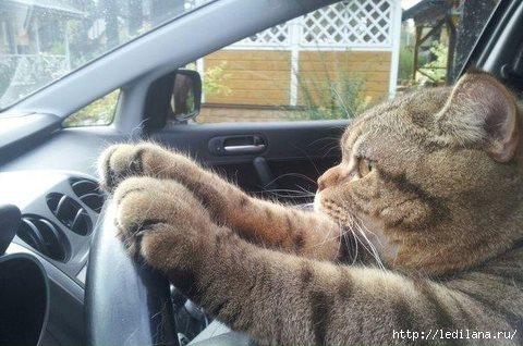15 ошибок начинающего водителя