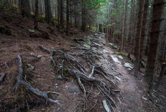 Аокигахара - лес для самоубийств.