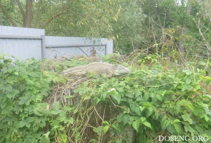 В Киевской области поймали с…