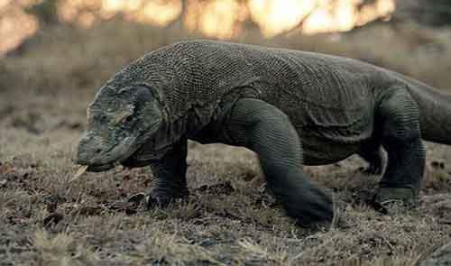Самые невероятные средства и способы выживания представителей фауны