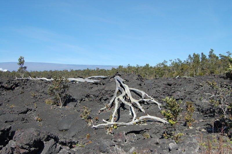 Гавайи. Большой остров. Лава и вулканы америка, вулканы, гавайи, пейзажи, природа, путешествия