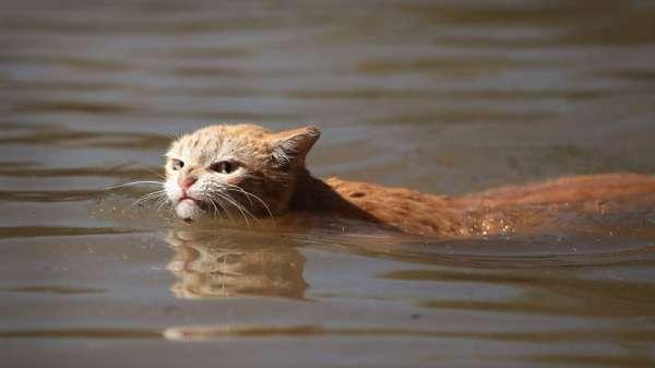 брезгливый здой кот