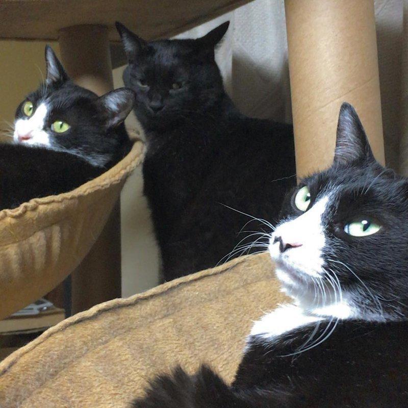 Не мешать, у нас тут переговоры кот, коты, опасный кот, прикол, суровый