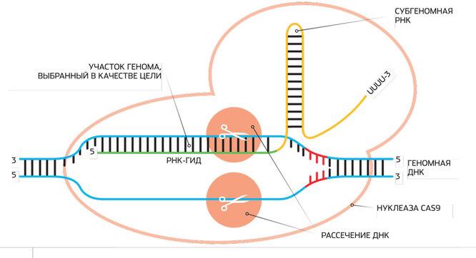 Генная терапия: как лечат генетические заболевания биотехнология,генетика,наука,человек
