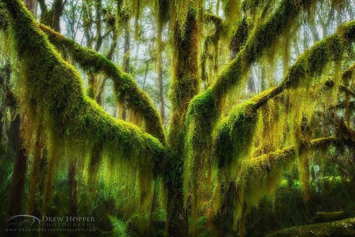 17 самых великолепных деревьев в этом мире