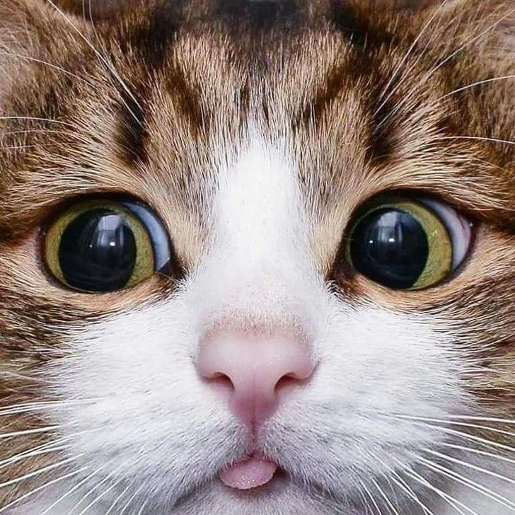 картинки кошачьи мордочки один