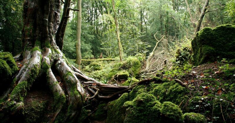 Лес Пазлвуд в Великобритании, которым вдохновлялся сам Толкиен