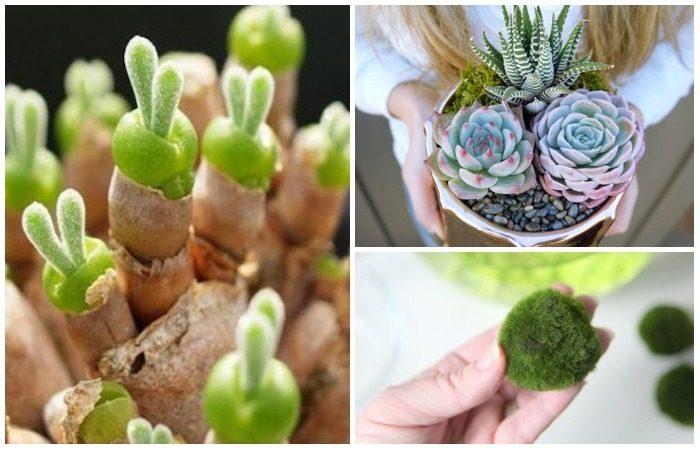 Комнатные растения с очаровательной внешностью