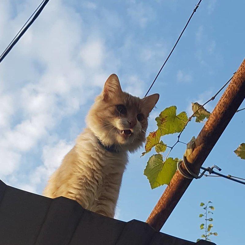 Ха, кажется, ты не ждал меня сверху кот, коты, опасный кот, прикол, суровый