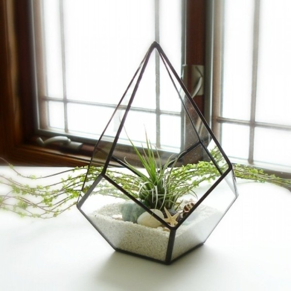 живые растения в необычных вазонах