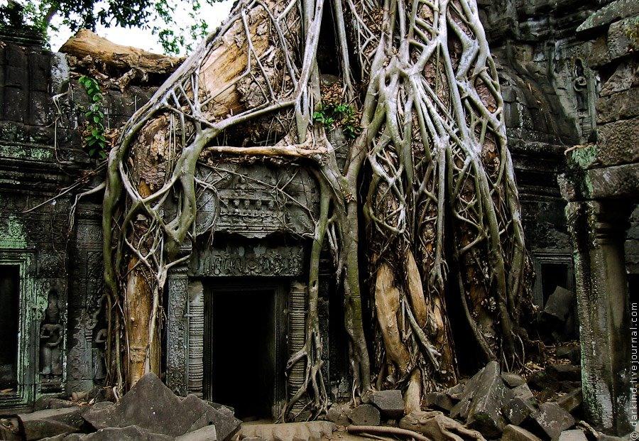 фото замков в индии проросших деревьями жизни