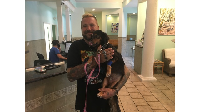 Во Флориде маленький пес упал за борт во время шторма, но выжил и проплыл 3 мили до берега