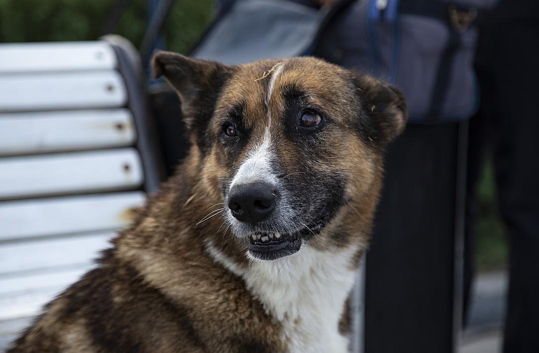 Мухтар - верный и преданный пес. Фото: Наталья Гоцанюк