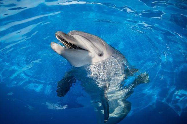 «Спецназ» без погон. Правда и мифы о боевых дельфинах