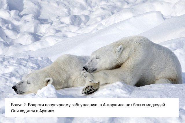 Невероятные факты об Антарктиде. Вам будет сложно в них поверить факты, антарктида