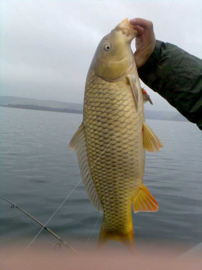 Клев, подсечка и вываживание рыбы