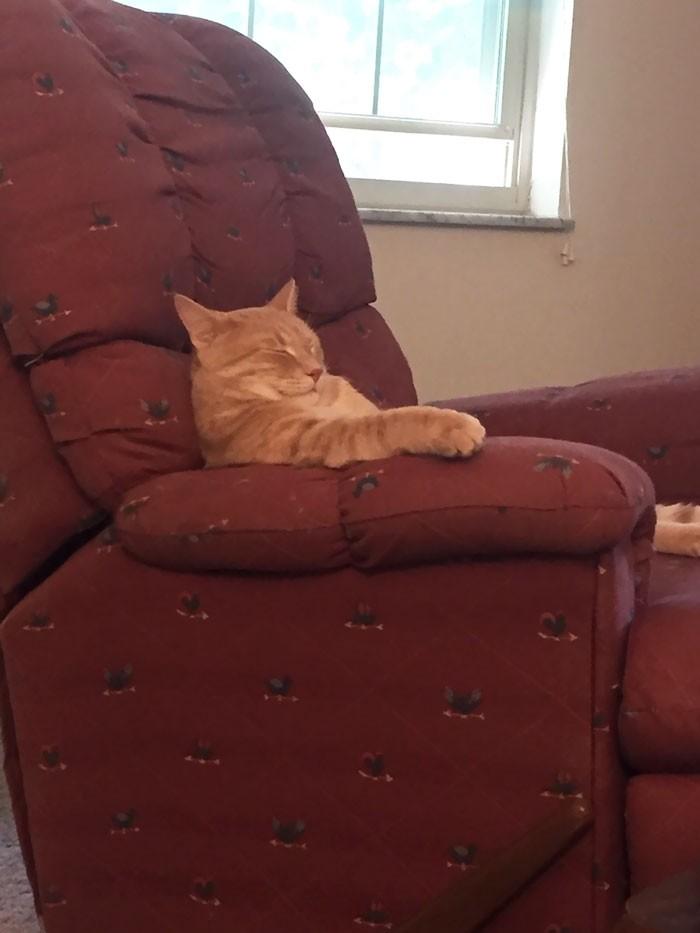 """""""Вот в такой позе уснул мой кот"""" кошки, приколы, прикольные фото животных, смешные кошки"""