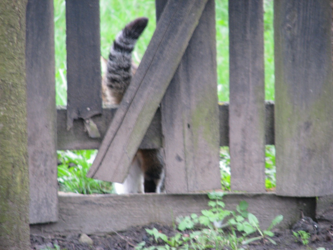 Братья наши меньшие: лучше не шутить с котом!