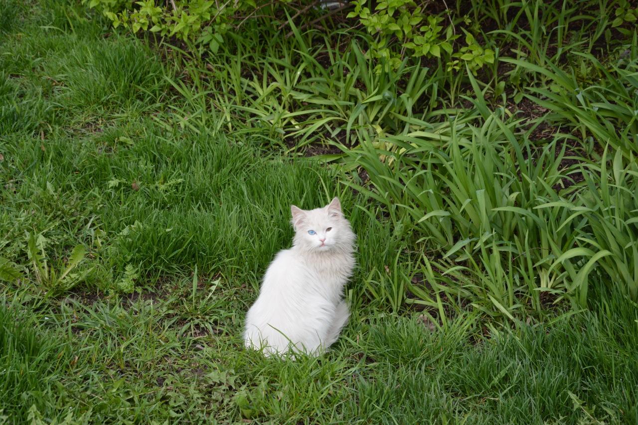 Кроме смеха: котик остается котиком