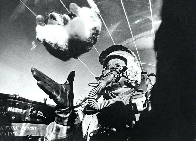 Изучение влияния невесомости на живое млекопитающее в 1958 году