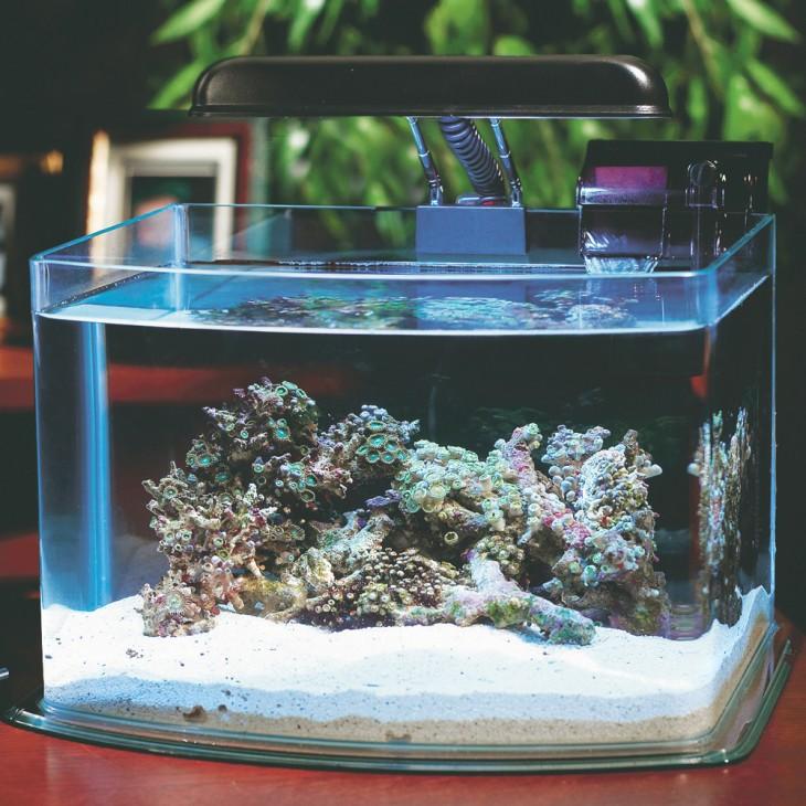 кольцо в аквариуме фото