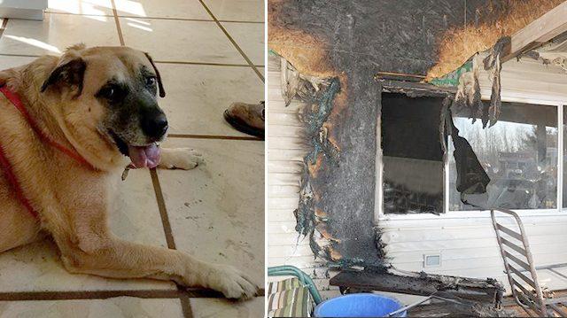 Cемья вернулась в сожженный дом спустя 2 месяца, и вдруг их собака стала рычать и рыть пол