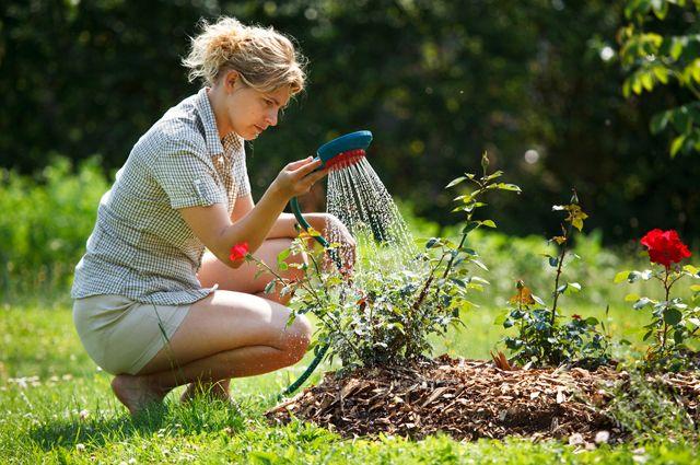 Вода без труда. Какие решения помогут вам забыть о ежедневном ручном поливе