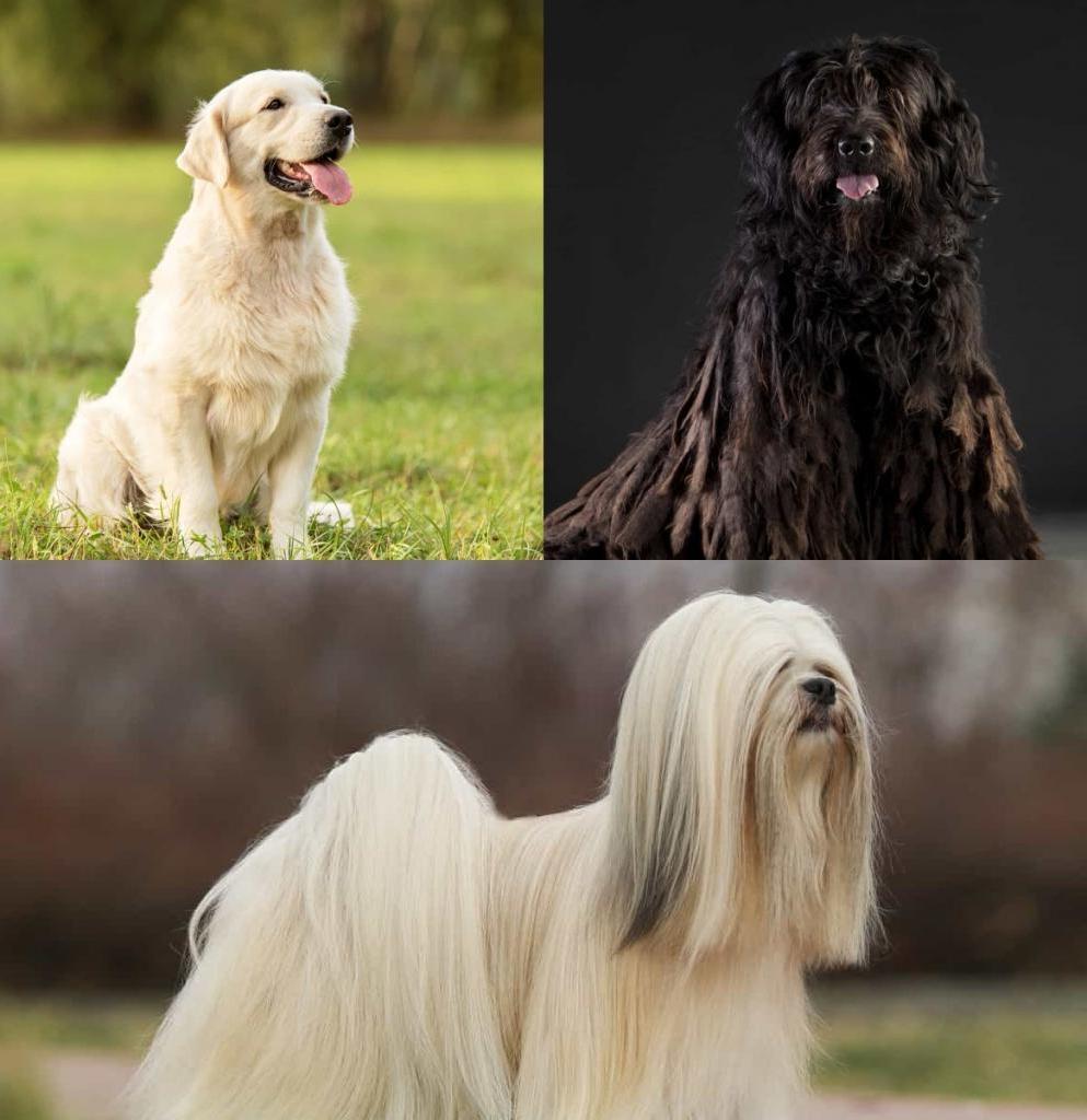 -Дай, Джим, на счастье лапу мне-: какие породы собак совместимы с вами по знаку зодиака