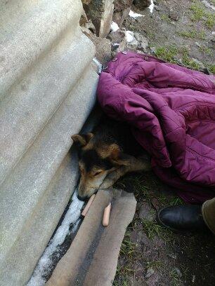 «Она билась в судорогах среди стаи бездомных псов…» У собачки Милы – очень туманное прошлое, но теперь её жизнь меняет свой курс!