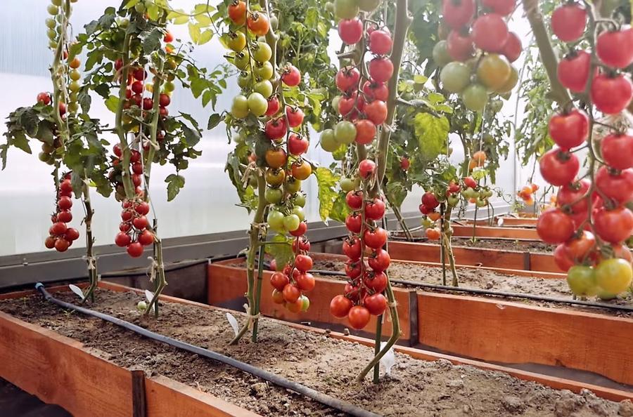 проектировании грядки для помидоров фото при изготовлении техника