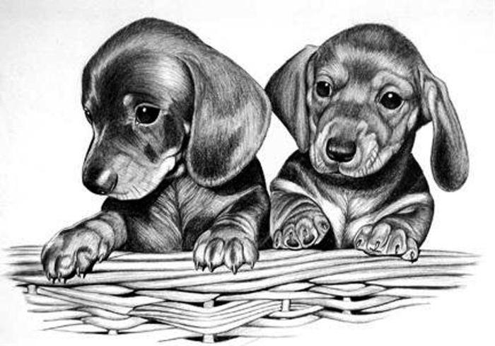 Собачки карандашём (30рисунков)
