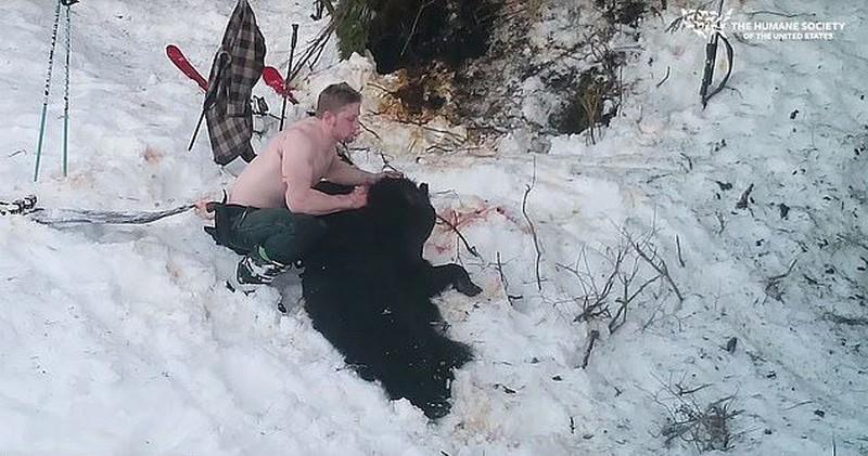 Папаша с сынком убили спящих медведицу с медвежатами животные