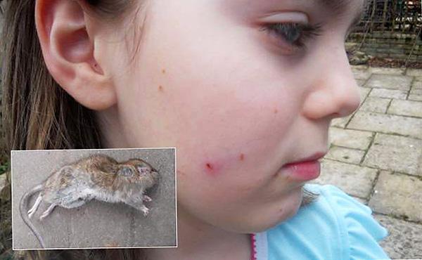 Если мышка кусается играючи — кому-то приятно видеть, как вы страдаете, и он всячески этому способствует.